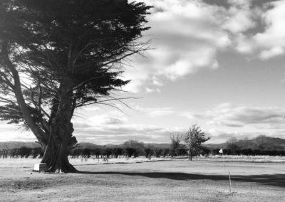 golf55